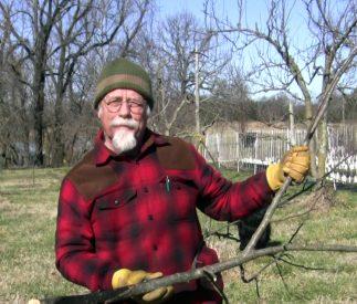 Restorative Pruning