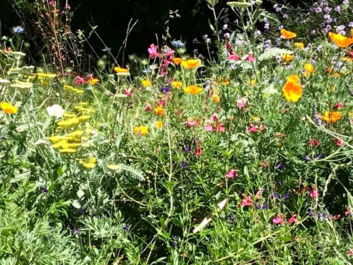 Low Maintenance Gardening in the Time of Pandemic and Drought