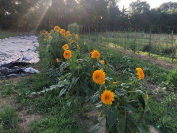 Incubator Farm Project in its Second Season