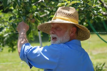 Apples and Pears: How to Tell When They're Ripe