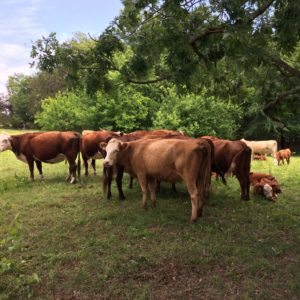 Farm Update: Late Summer in the Ozarks