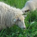 Getting Started in Livestock: Lessons Learned